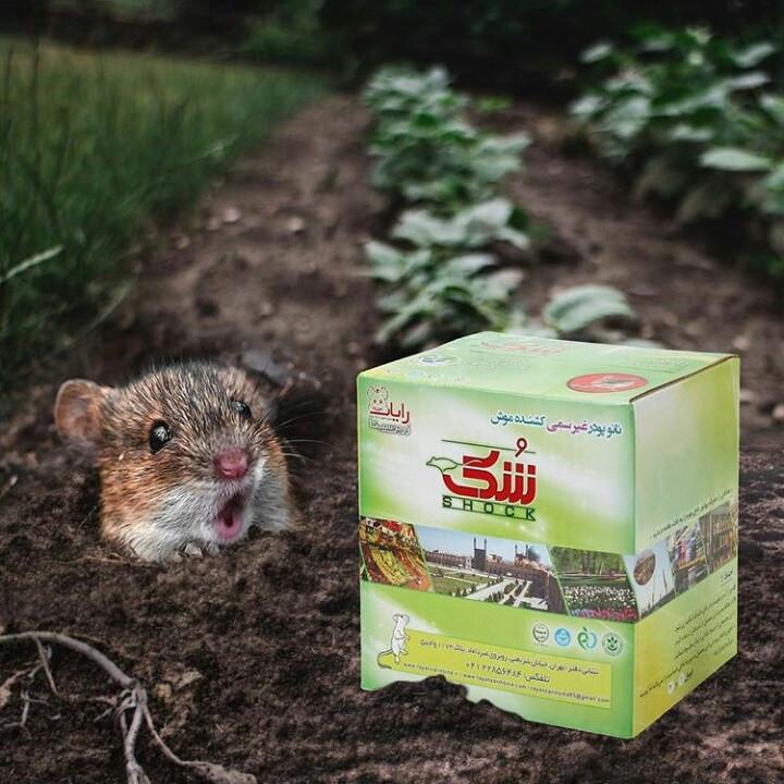 مسحوق إبادة الفئران الحاوی على نانو جسیمات – التطهیر من الفئران